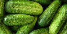 Pflanzen: Gurken (Gemischt / Mixed) / Salatgurke / Cucumber + Gewürzgurke - Cornichons / Pickles + Gemüse / Vegetables