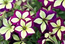 Beautiful Flowers / Beautiful flowers