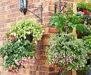 Plant Pot Ideas