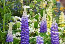 Garden Inspiration from RHS Chelsea Flower Show 2017