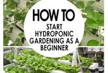 Hydroponics / Growing your own plants without soil