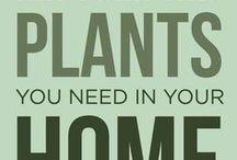 Houseplants that clean the air!