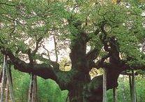 Native British Trees