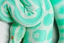 Reptiles *_*
