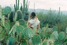 / into the desert /