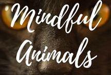 Mindful Animals and Pets / Pets and Animals.  Mindfulness.  Respectful Living.  ARepectfulLife.com Blog.