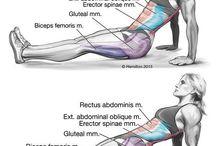 Exerciții pentru femei