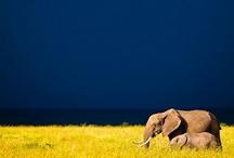God's Beautiful Creatures <3 / animals :) / by Jenny Blaisdell