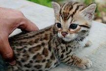 Kitties <3 / by Linda Goodman
