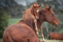 Animals / by Julie Holden