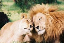 Animal / Love & peace