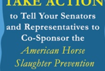 #SaveAmericasMustangs / by Kay M. The More The Merrier