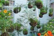 Ogród i uprawy