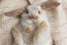 The Bunny Journal / Do your rabbit research you get one! I found lots of great resources to help with new and old bunny-moms alike. Here are all the training, tips, care and DIY fur baby things! #adoptdontshop / by Jessie Lawrence