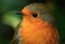 ~ Birds ~
