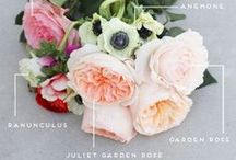 Flora J'adore / Bouquets and floral art that inspires us. / by Design Aglow