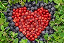 Berries and fruit trees / great berries and small fruit trees for your northwest garden