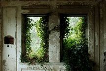 Life and beauty in decay / Plants taking over architecture