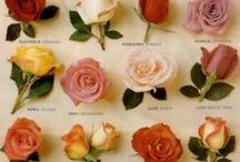 *Gardening: Plant ID: Roses / by Sherri Woodbridge
