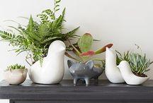 ~ Indoor Plants ~
