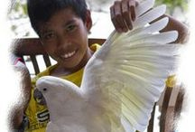 Cute Filipino kids! / A Pinterest board full of cute Filipino boys & girls. We are helping out these unprivileged young Filipino boys and girls with the help of the Tropical Breeze. More information on the website www.TheTropicalBreeze.org Please re-pin these pins!