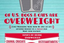Caring for Your Furry Family / Infographics and articles relating to small animal care.