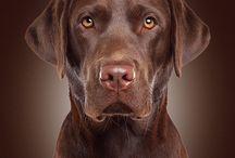 Man's Best Friend / Adorable dogs