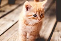 Purr-fect Cats / Pictures of kittens and cats.