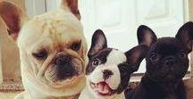 AdestrandoSeuCachorro / Dicas & Truques de como você pode adestrar seu Cãozinho em Casa e tornar o convívio entre ambos e sua Família Melhor e mais Alegre