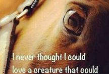 My favorite horse quotes / Horse Quotes