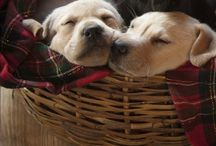 """Puppy Love  / """"A good dog deserves a good home"""""""