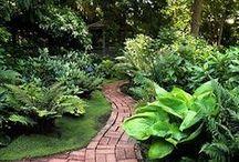 Backyard Beauty / by Melanie Wissel