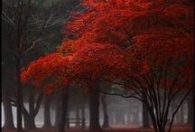 Inviting Places / by Melanie Wissel