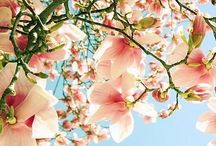 """Bloomin' Beauties!  / """"To be overcome by the fragrance of flowers is a delectable form of defeat."""" ~ Beverley Nichols"""