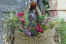 Gardening / by Janet Cheney