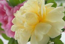 Flowers and House Plants / by Ellen Moeller🌿