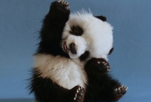 Black & White & Adorable / Pandas are adorable. The End. / by Sweet Junebug Designs