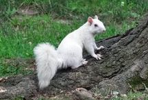 Quirky Animals & Wildlife