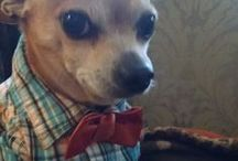 Chihuahuii / by Harper {Seams Couture}