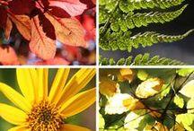 Autumn / Autumn colours and nature