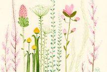 Art & Illustration / Illustration & Art - Floral, Natural, Botanical & Pretty Style