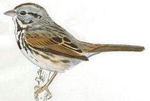 *ART ~ DRAWING BIRDS