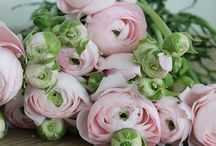 Floral arranging / by Natalie Payne
