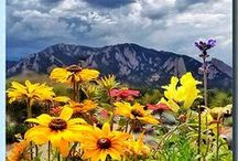 Colorado ~ No Place Like Home / The Endless Beauty Of Colorado ~ Godliness, serenity, beauty, majestic, warmth, cold in the snow, high in the mountains, peacefulness, beautiful autumn change of colors.  / by Tracy