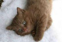 animali ma soprattutto gattiiiiiiii