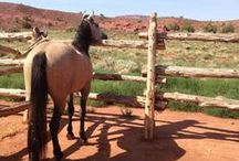 Wild Mustangs / by Sorrel River Ranch Resort & Spa