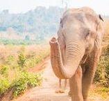 Visiter la Thaïlande / Notre voyage de 15 jours en Thaïlande ! Choses à faire et à voir dans différentes régions thaïlandaises. #travel #thaïlande #thailand #thaïfood #temple #elephants #bangkok #chiangmaï #voyage #visit #traveller #bouddha #buddha #lesescapades
