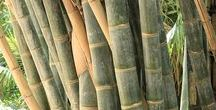 Design with Bamboo / Bamboo is the fastest growing plant on the planet.  Bamboo releases 30% more oxygen into the atmosphere and absorbs more carbon dioxide compared to other plants. It also needs less water to grow, relying only on Rain Water.