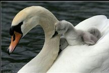 Mommas and babies / by T Phelps