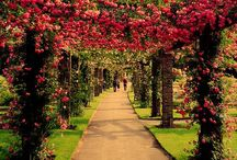 Enchanted Gardens / Beautiful gardens from all around the globe. / by Liz Painter
